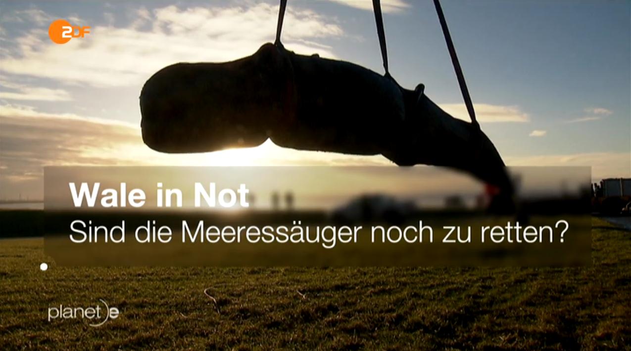 "ZDF-Dokumentarfilm ""Wale in Not"" der Beitragsreihe planet-e"