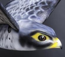 Raubvogel-Drohne als Vogelscheuche sichert Flughäfen